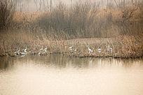 美丽的湿地夕阳时刻白鹭栖息