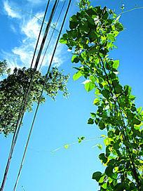 天空里的绿叶和天线