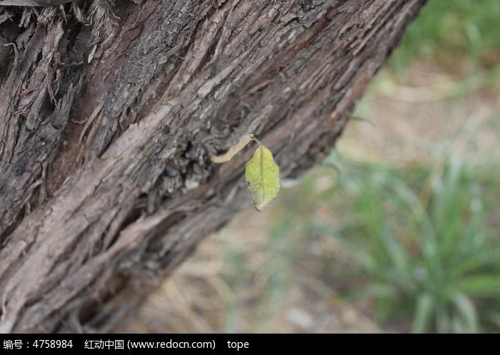 树的纹理图图片,高清大图
