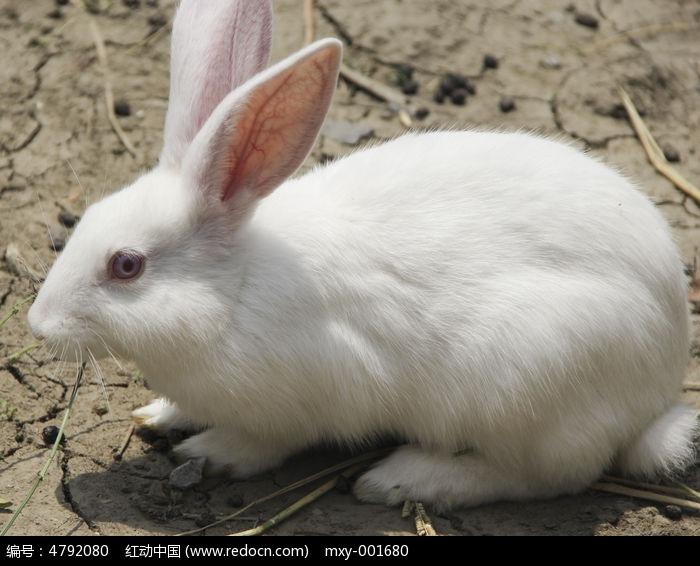 桌面壁纸 唯美 可爱 小白兔