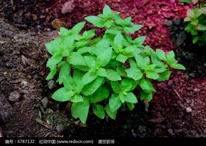 原创摄影图 动物植物 农作物 植物种植