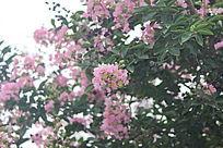 粉红花卉特写