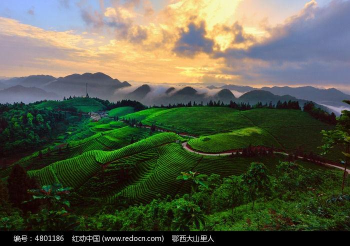贡茶之乡美景图片