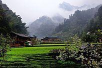 麻柳溪茶乡