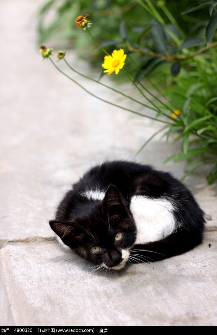 原创摄影图 动物植物 家禽家畜 蜷缩的小猫