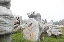 公园风景 石头
