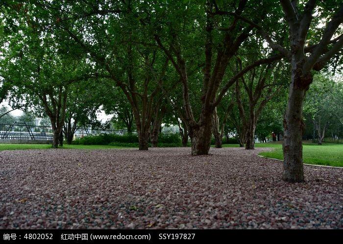 原创摄影图 动物植物 树木枝叶 公园树林环境