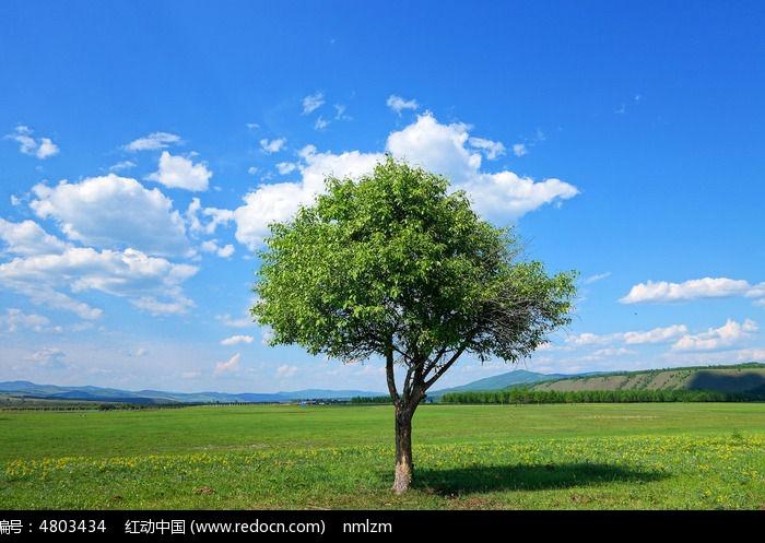 树木动态壁纸大全图片