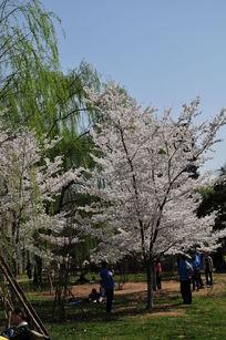 花草 生物世界 自然风景 自然景观