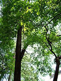 树干上茂密的树叶