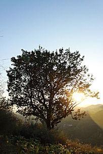 夕阳余光照耀的山岭树木