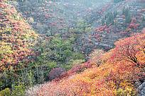 金秋季节山中多彩的田野