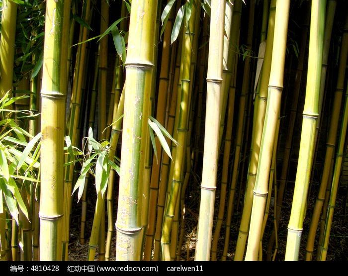 漂亮的竹林图片