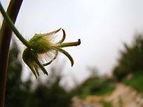 一朵安静的花