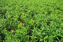碧绿的植物素材背景