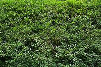 绿色植物背景纹理素材
