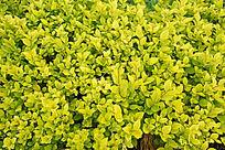 嫩绿色的植物背景素材