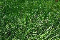 色彩艳丽的绿色水草背景素材