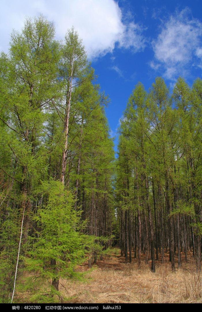 树木图片,高清大图_森林树林素材