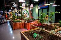室内植物展