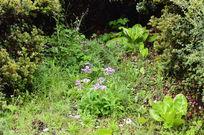 草甸角落的粉色野花