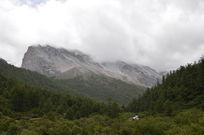 躲在松柏后的雪山