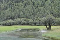 古树倒影在溪流