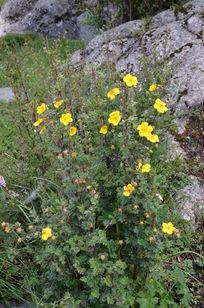 裸露的石块和黄色小花
