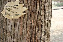 名木古树纹理图片