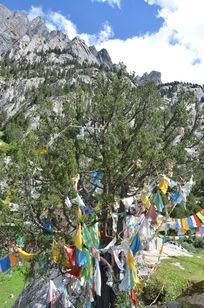 神山下的祈愿树