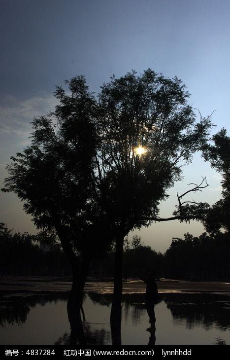 树木剪影图片,高清大图_园林景观素材
