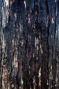 树皮底纹背景