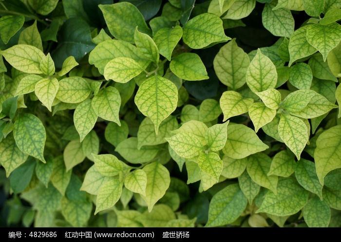 原创摄影图 动物植物 树木枝叶 叶子背景墙  请您分享: 红动网提供