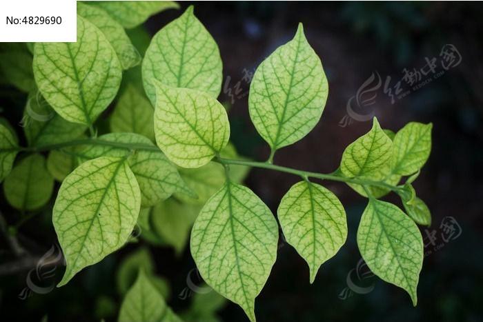 原创摄影图 动物植物 树木枝叶 叶子纹理  请您分享: 红动网提供树木