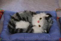 白灰猫咪卧在毯子上