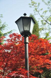 枫叶下的路灯