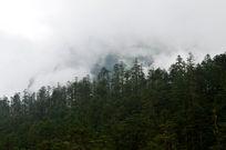 浓雾下的成排树木