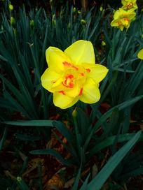 植物园耀眼的黄色花