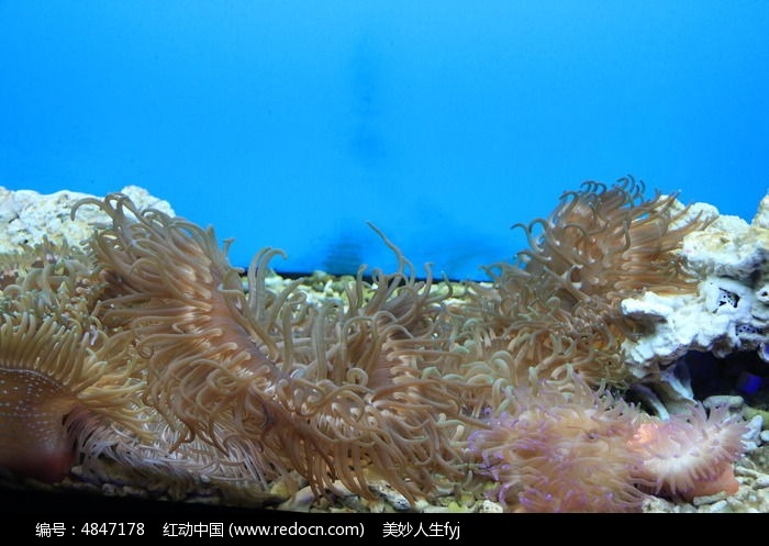 大珊瑚丛简笔画