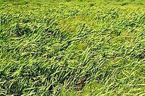 风中的草甸