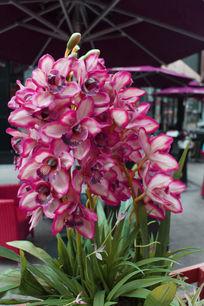 街边粉色艺术花