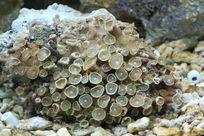 奇形怪状珊瑚