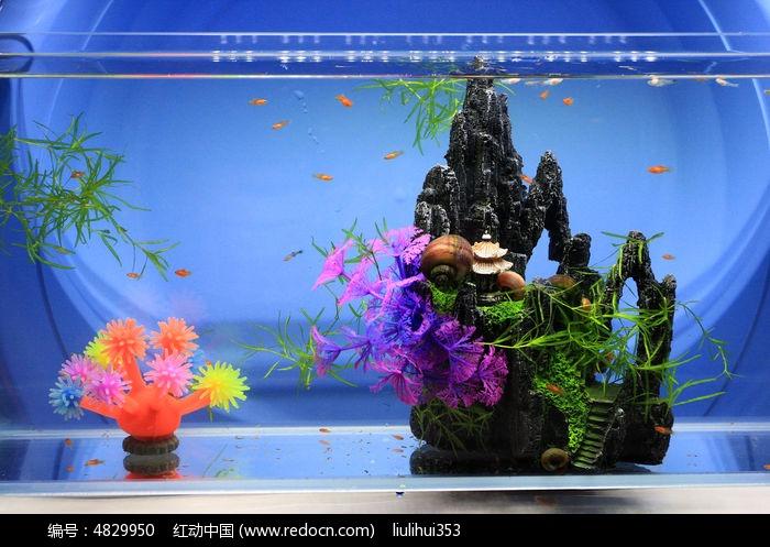 小金鱼缸图片