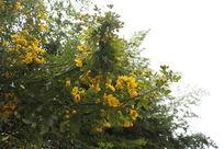 金黄的黄色花