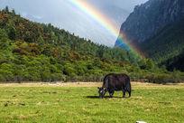 彩虹下的动物