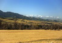 草原的秋天