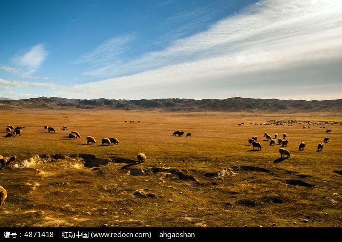 草原上的 羊群 图片, 高清 大图