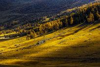 美丽的草原秋色