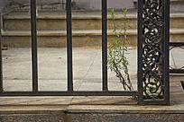 铁门旁边的小草