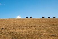 一群吃草的马